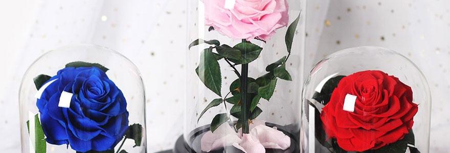 Des roses mises sous cloche